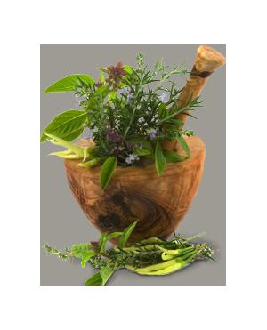 Plante médicinale